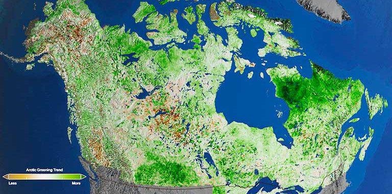 Арктика-стремительно-зеленеет